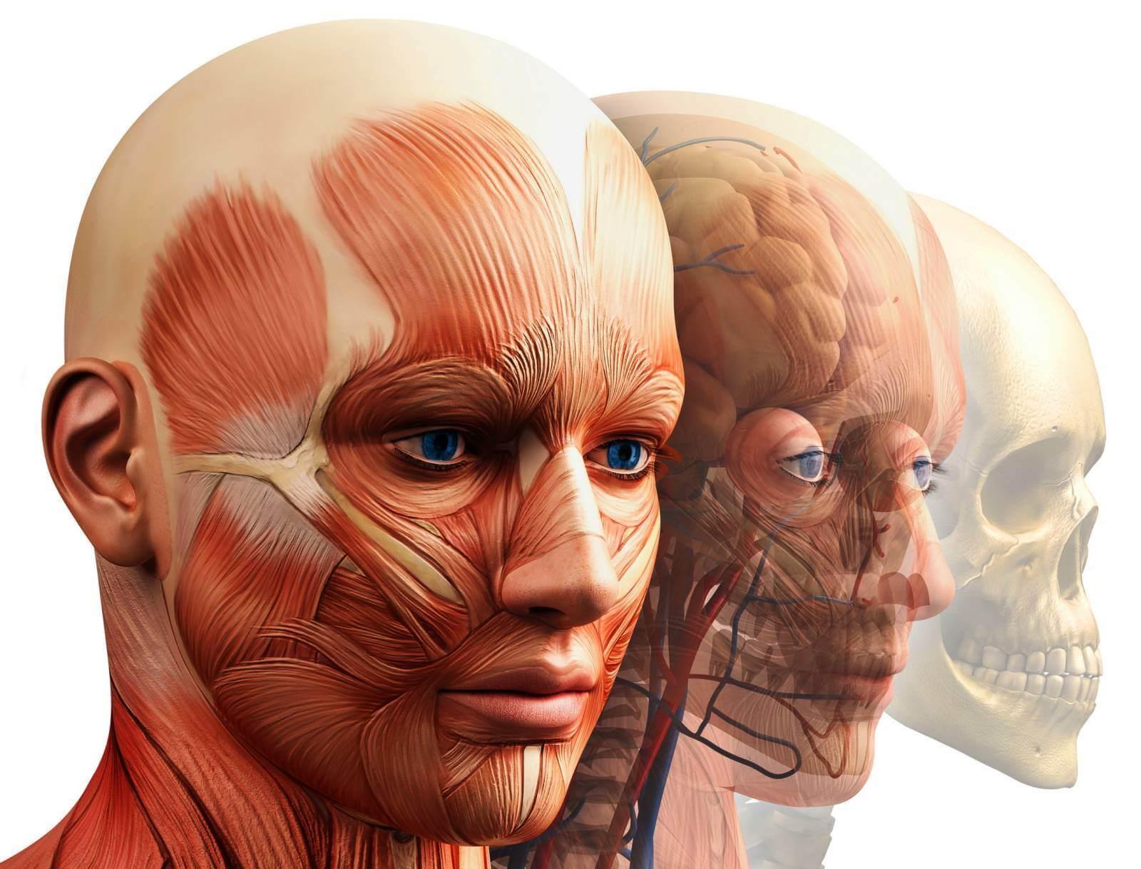 акции мышцы лица фото картинки тогда обстоятельном